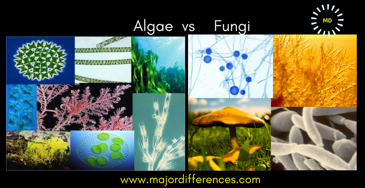 hight resolution of algae fungi