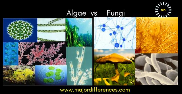 Algae vs Fungi