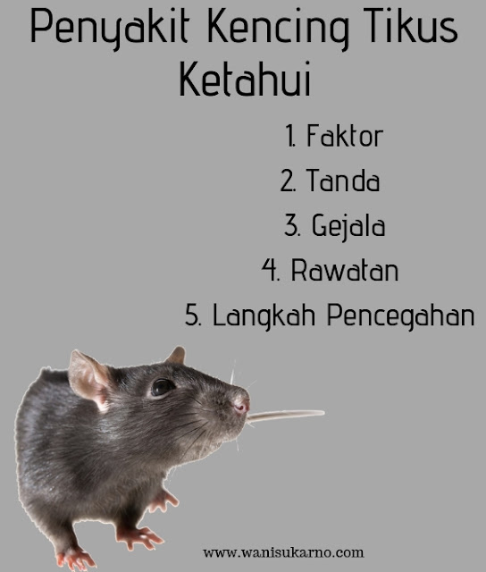 faktor, tanda, rawatan dan langkah pencegahan untuk penyakit kencing tikus