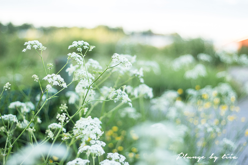 Summer flowers - Plunge by tiia