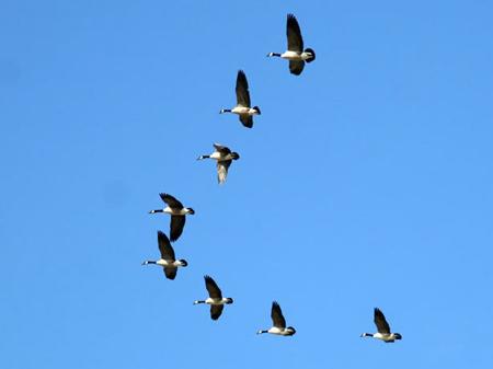 Giải mã giấc mơ thấy chim Nhạn & Ý nghĩa mơ thấy chim Én