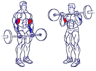 Curl bíceps barra ejercicio hombre rutina pesas