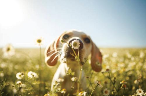 dog sniffing flower