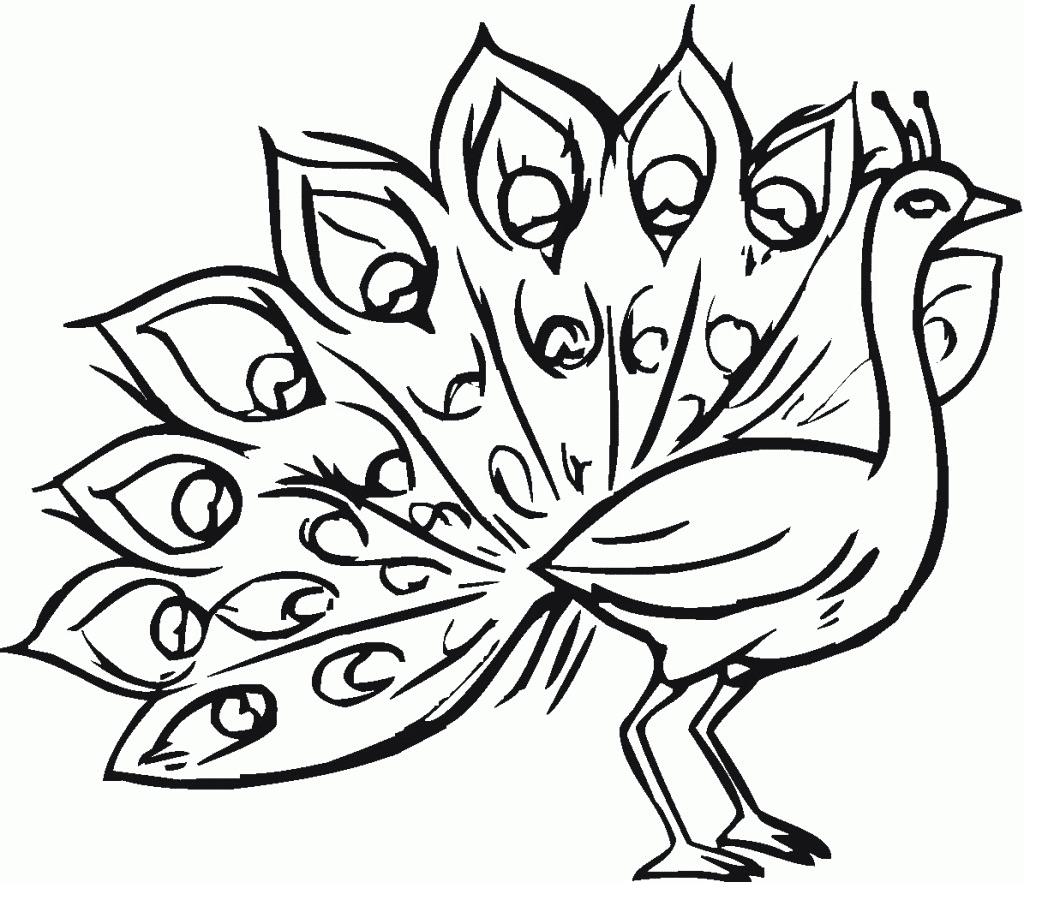 Koleksi Gambar Burung Merak Untuk Mewarnai