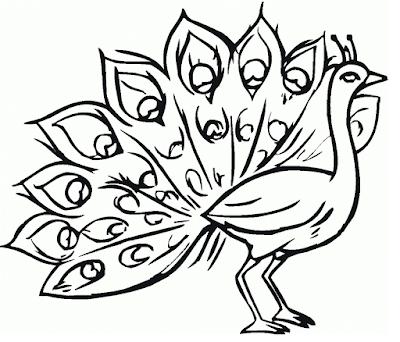 Gambar Mewarnai Burung Merak