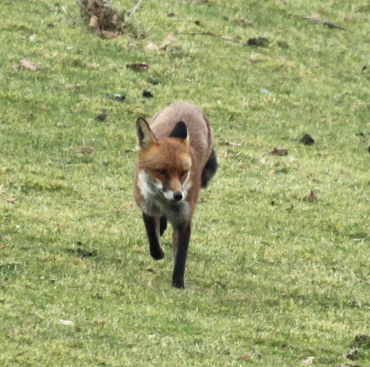 wild with pants quick brown fox