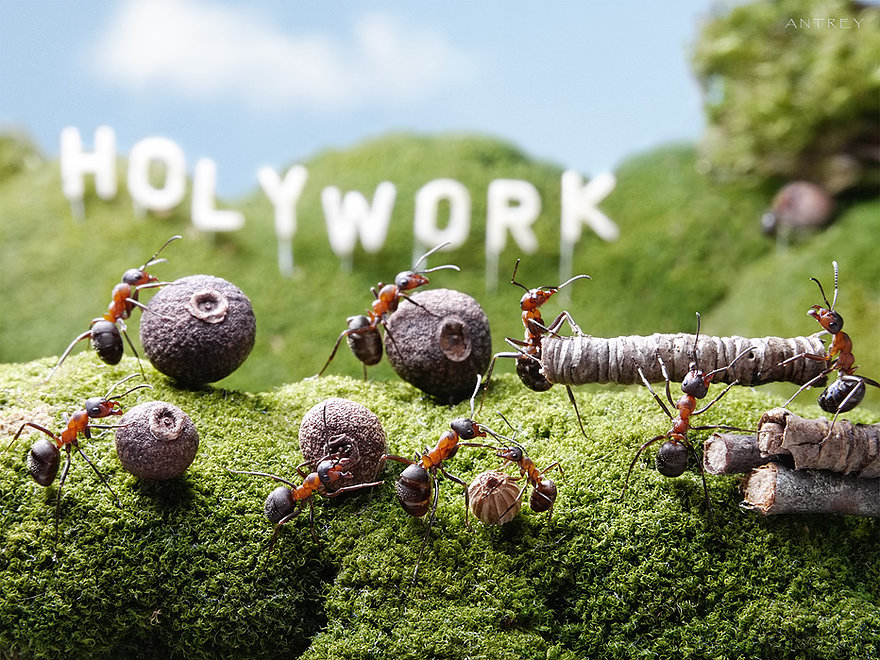 17-Holywork-Hill-Andrey-Pavlov-Photographs-of-Ants-an-Affordable-Journey-to-a-Parallel-World