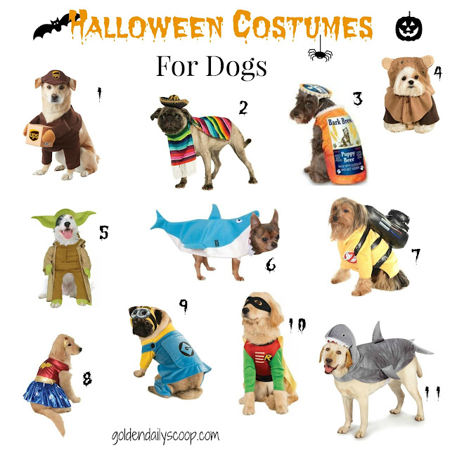favorite dog halloween costumes