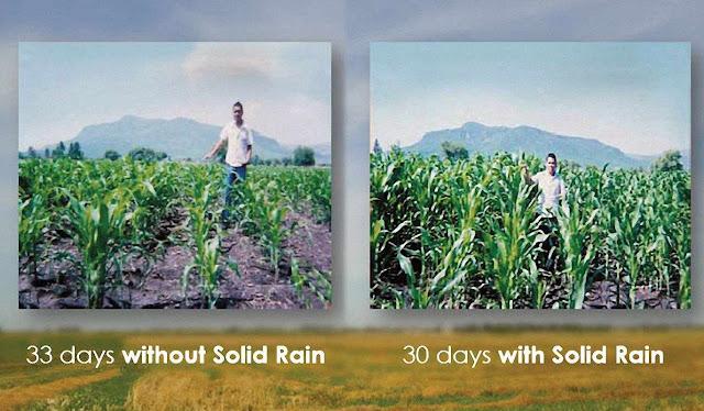 """""""Chuva sólida"""": comparação milho com e sem o produto"""
