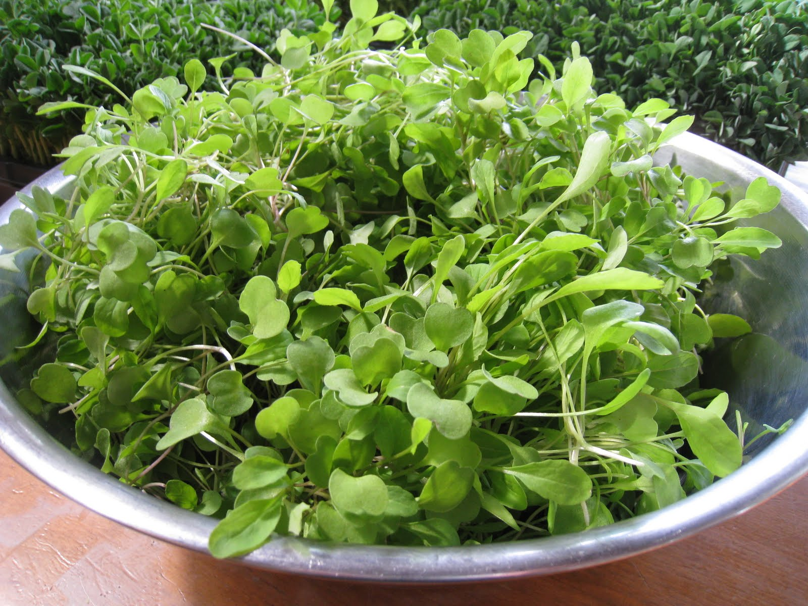 Christina S Garden Arugula Microgreens