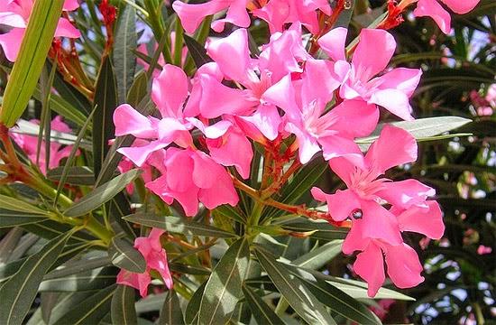 Blog de tudodetodos : TudodeTodos, 5 Flores assassinas /REPASSANDO....