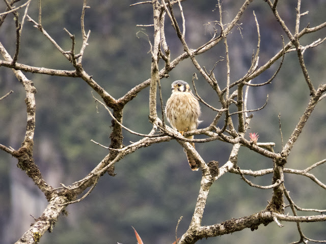 Bird of prey at Machu Picchu in Peru