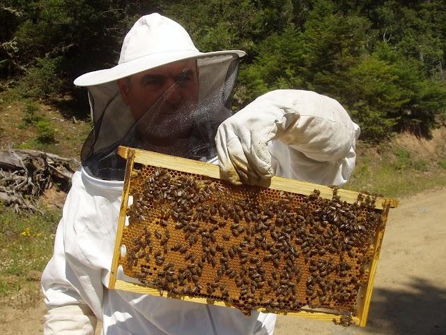 5 βήματα για την ανάπτυξη της ελληνικής μελισσοκομίας