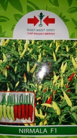 benih petani,tahan virus, buah lebat, cap panah merah, tahan layu, tahan cekaman calcium, Nirmala
