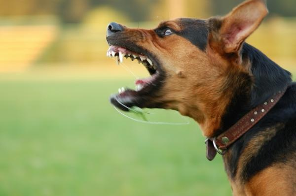 animal Compreendendo o Comportamento dos Cães