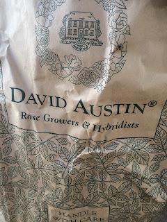 Roses from David Austin