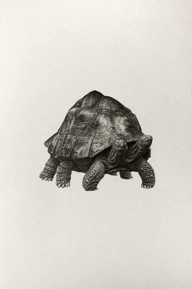 Mateo-Pizarro-07 Bestiary of Improbable Animals III: Drawings by Mateo Pizarro Design