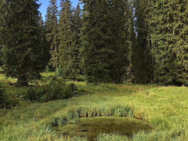 Flösch und Wald