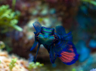Top 3 Most Beautiful Fish | Animal Photo