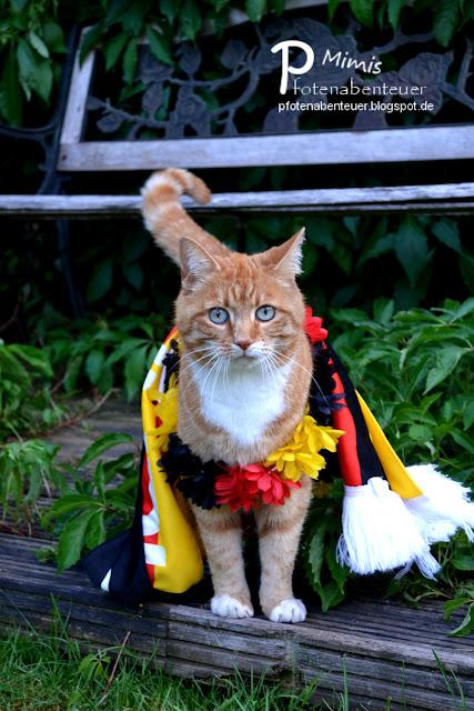 Fußballfan Katze Mimi mit Deutschlandschal