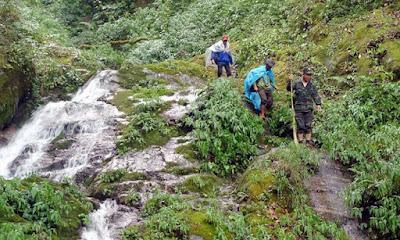 Vùng núi trồng sâm Ngọc Linh tự nhiên tốt nhất hiện nay