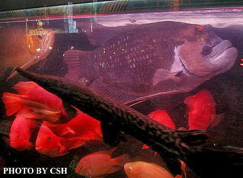 【古代】古代戰船魚 – TouPeenSeen部落格