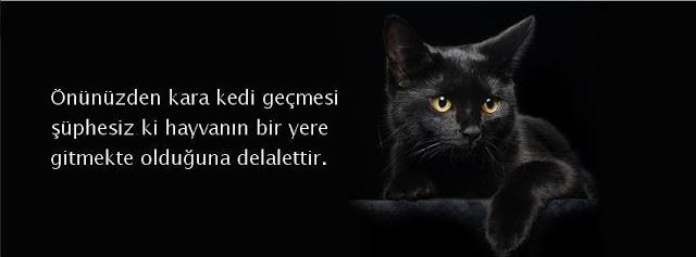 kedi, kara kedi, batıl inanç, kocakarı lafı