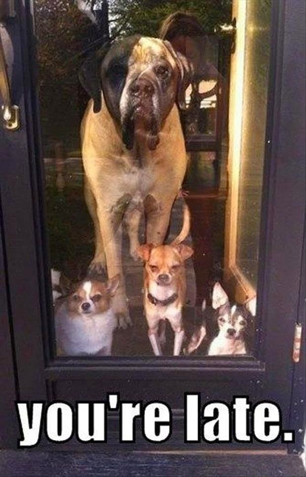 Funny Dogs Waiting at the glass door -  You're Late Meme Joke Picture