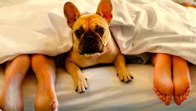 ¿Durmiendo con su mascota? Conozca los pros y contras