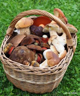 na grzyby, grzybobranie, ucinac czy wykrecac, las, prosto z lasu, grzyb, zbieranie grzybow, grzybiarz