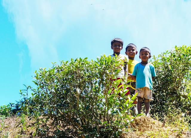 Sri Lanka tea pickers