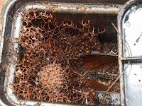 Kotak Meteran Air Keluarga Ini Lama Tertutup, Setelah Dibuka Ada 'Kerajaan' Makhluk Kecil, Videonya Bikin Merinding