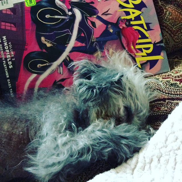 Murchie lies mostly out of a blanket nest, both paws pressed over his nose. Behind him, propped up on its side, is a trade paperback copy of Batgirl Volume 3. Its cover features a red-haired white girl in a bat suit. She rides a motorcycle.