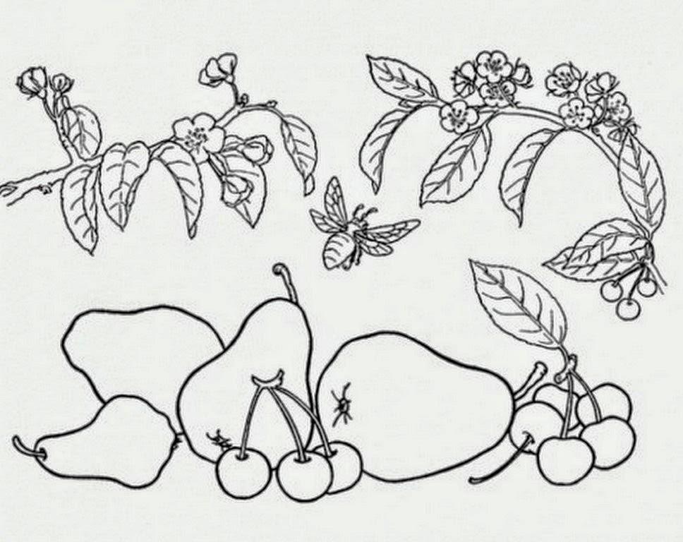 Dibujos Para Colorear Bodegones: Pintura Moderna Y Fotografía Artística : Frutas Y Flores