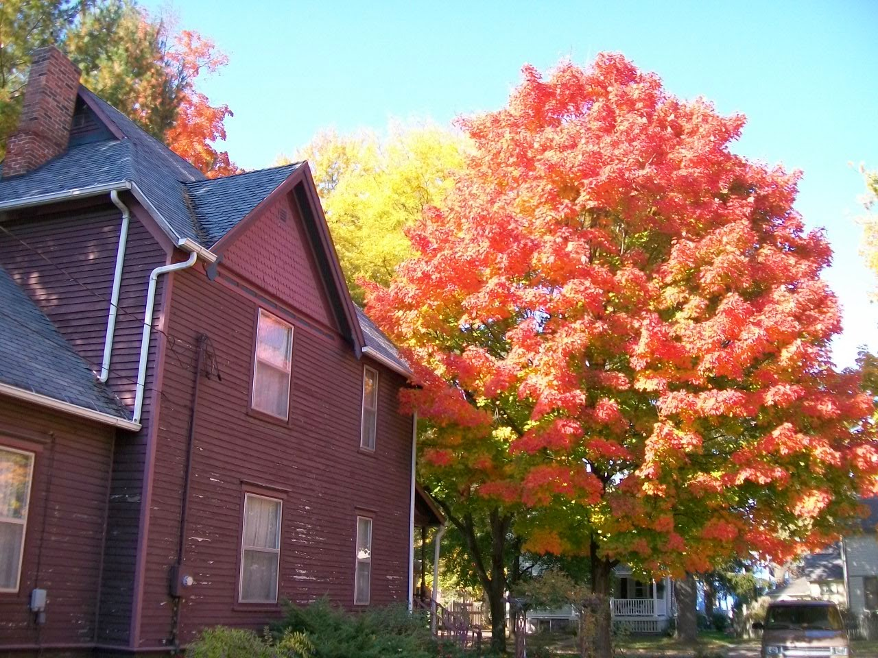Fall at Plumfield