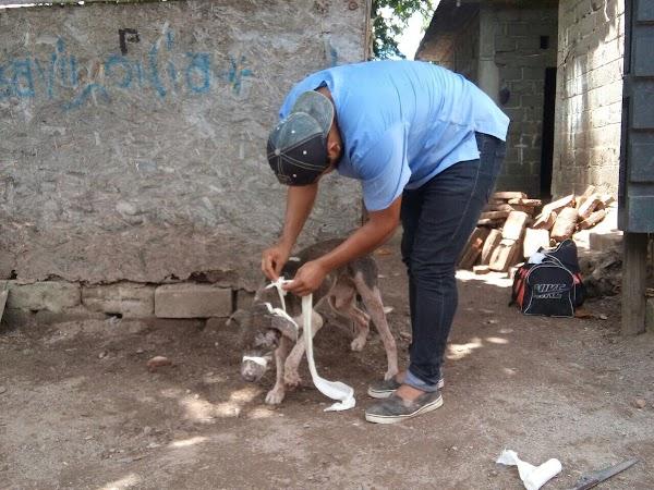 """Curan a """"Plomo"""" el perro herido por el sismo en Juchitán"""