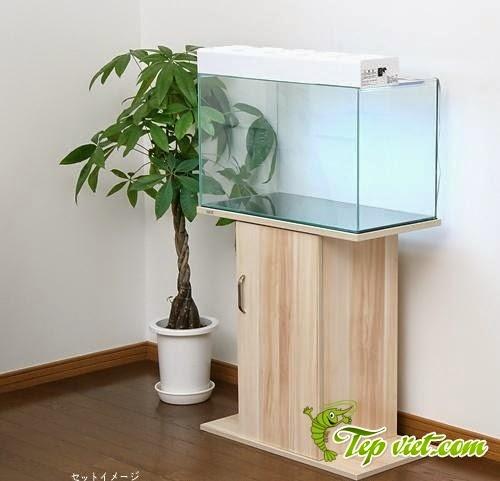 Mẫu thiết kế hồ thủy sinh với tủ gỗ