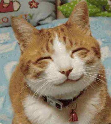 Fun Animals Wiki Videos Pictures Stories Funny Face Cute Cat