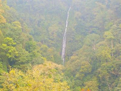 KHTK Petungkriyono Satu-Satunya Hutan Alam Yang Tersisa Di Pulau Jawa