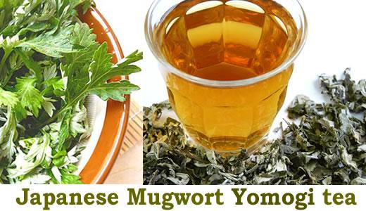 Japanese Mugwort yomogi Artemisia Princeps wormwood herb