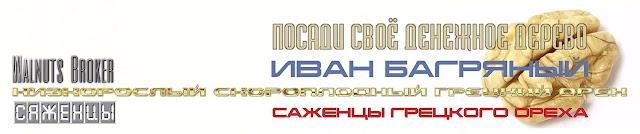 Саженцы грецкого ореха Иван Багряный, 0985674877, 0957351986, Walnuts Broker.