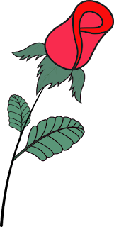 Red, Rose Flower, Rose Vector, Rose PNG, Rose Ai