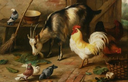 Damdaki keçi tavuk ve güvercinler