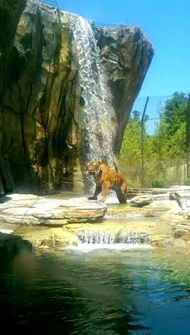 WW, Land of the Tigers, FL