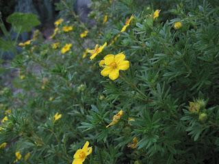 Tiny yellow five-petaled flowers.