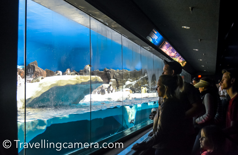 There is this beautiful section which is frozen for Penguins and there are multiple varieties of Penguins at Sea World.