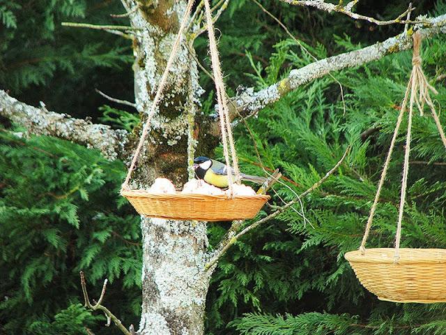 faire des mangeoires pour les oiseaux avec des objets recyclés