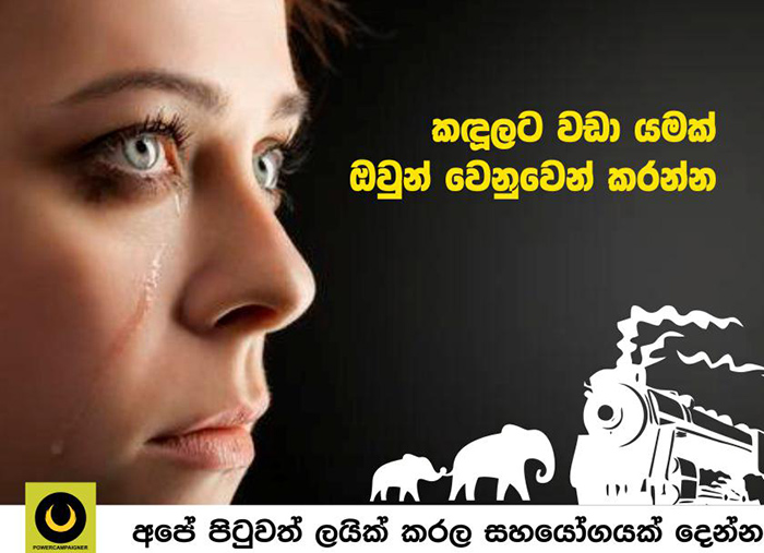 Save Elephants in Sri Lanka from Train Accidents.