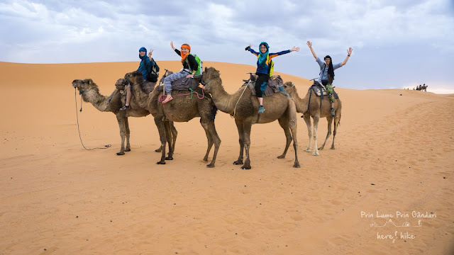 morocco sahara desert dromedary