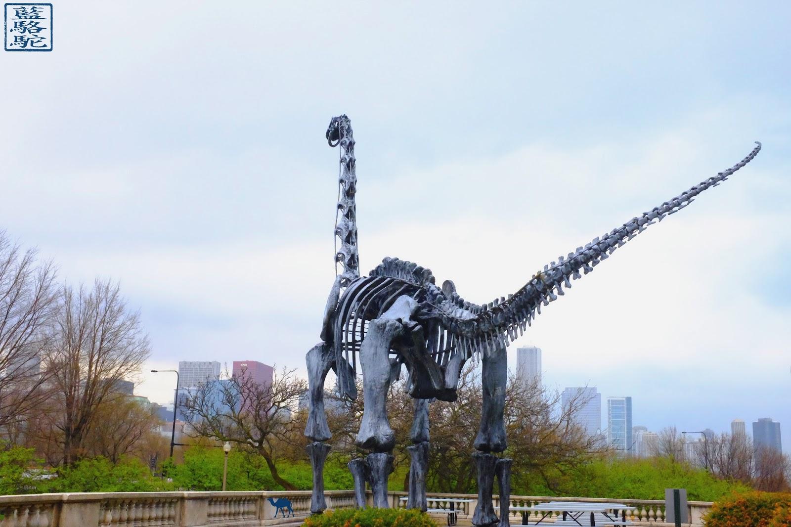 Le Chameau Bleu - Vacances à Chicago - Dinosaure du Field Museum